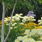 Perennial border - Summer Planting