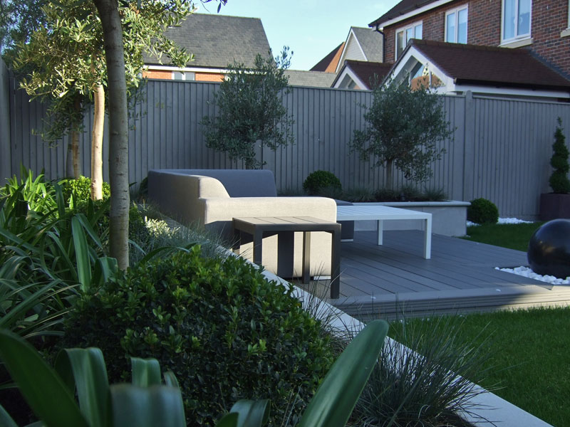Topiary box and standard olives in a raised planter behind a composite deck