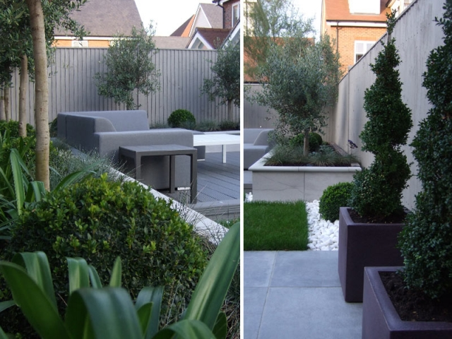 Planting with a limited colour palette - box balls and olive trees underplanted with alliums and festuca glauca