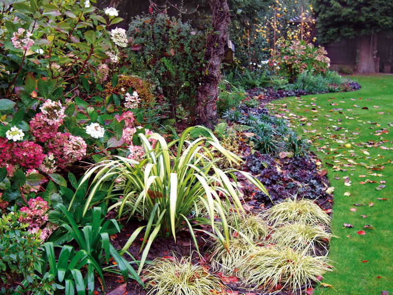 Shady late autumn borders with hydrangea, Phormium yellow wave and Carex evergold